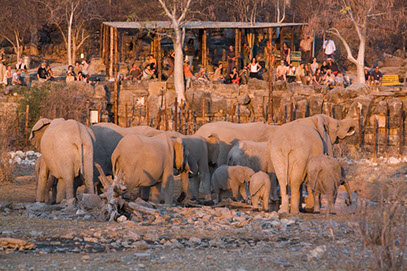 A group of Elephants feeding while Tourists are enjoying the sight