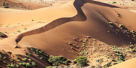 Namib-Naukluft park is referred to as the Namib Dersert Park in Africa