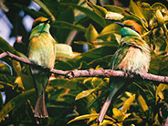 two birds sitted on a tree branch in bwindi impenetrable national park