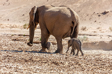 Hwange national park is renowed for it's vast elephant population