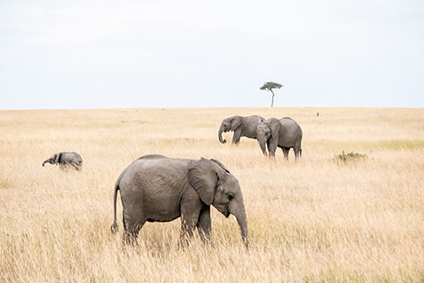 Addo Elephant National Park in South Africa is home to more than 600 elephants