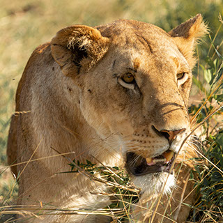 A 3day unforgatable wildlife experience at Queen Elizabeth National Park, Africa