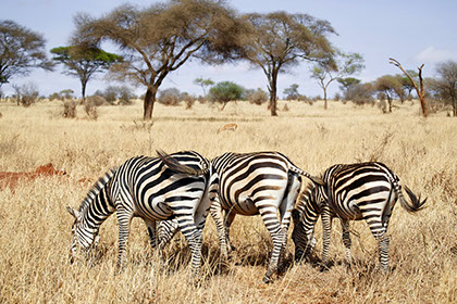 Kruger national park is one of the largest and most iconic tour destinations in Africa