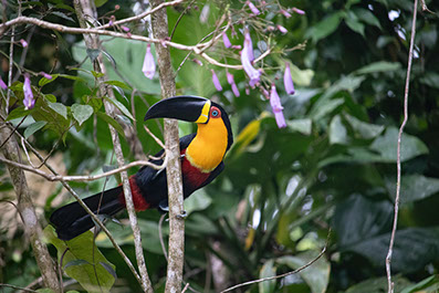 A rare bird species in the forests of Rwenzori Mountains National Park