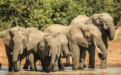 East Africa is the unbeaten true champion of Wildlife in Africa