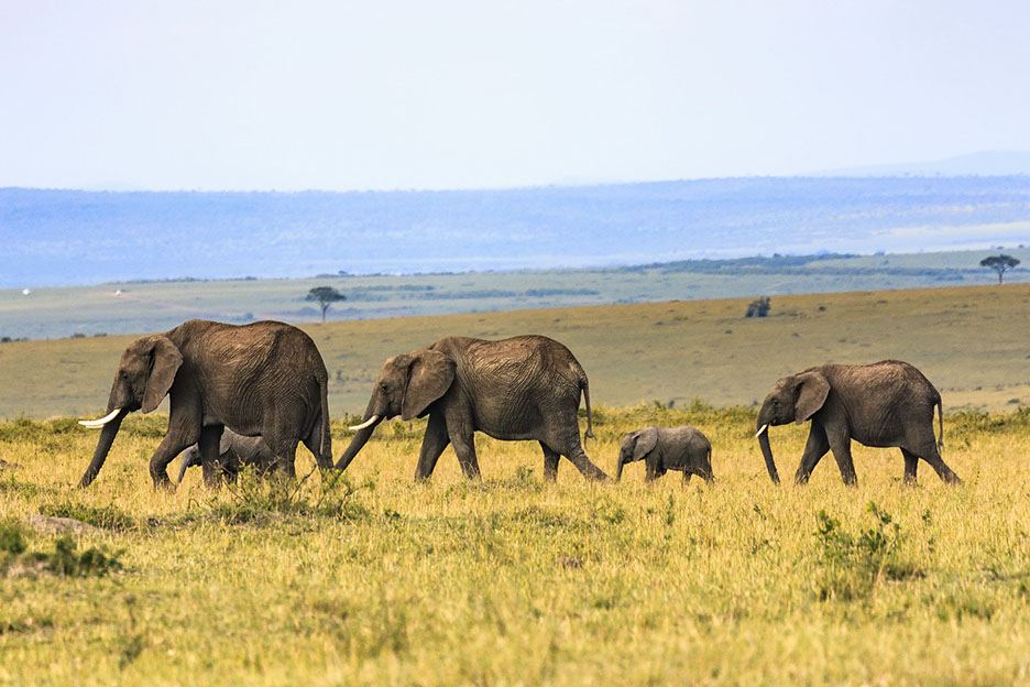Uganda has one of the best concetrated tourist attractions in Africa